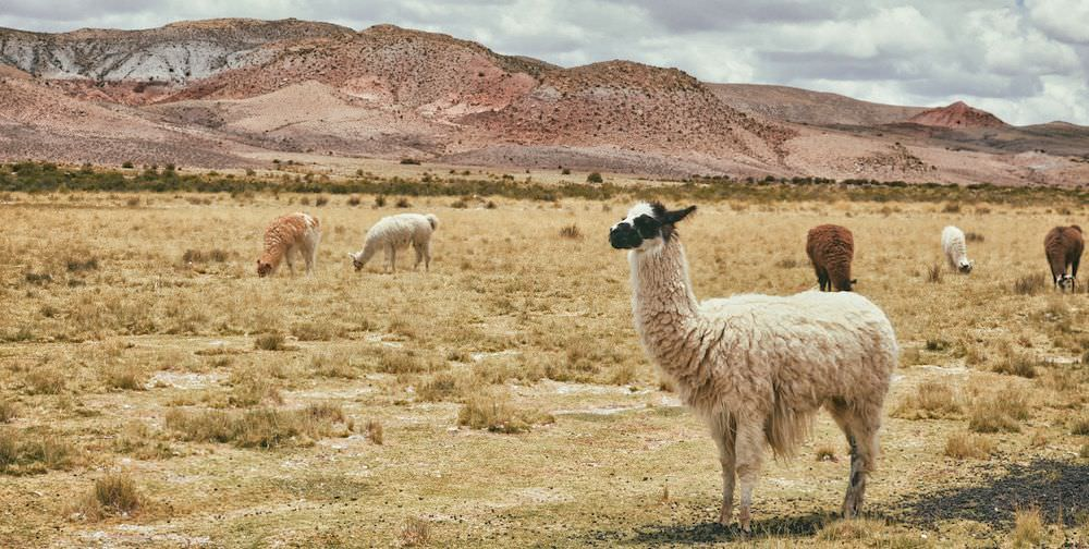How to Live in 10 Countries Before You Die - Personal Growth Through Travel - Llamas in Topiza Bolivia